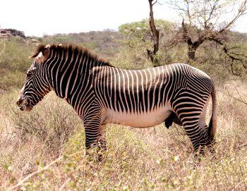 samburu Reservat